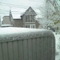 本格的な冬の到来?