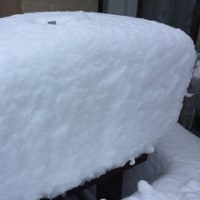 雪に翻弄された一日