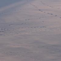 今日の天気 曇りです 、そして足跡たくさん