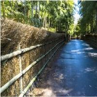 京都・森林公園京都の小径通り