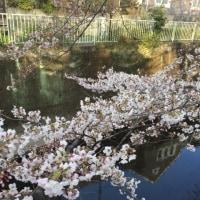 桜は桜である 「君が代条例」合憲と「教育勅語」強制のあいだ