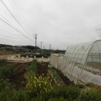 80坪に展開する全野菜の種類