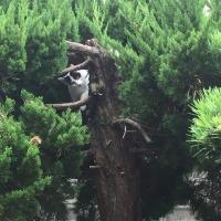 くーさん、木に登る