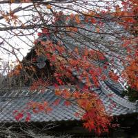 秩父33番札所菊水寺と椋神社11月26日
