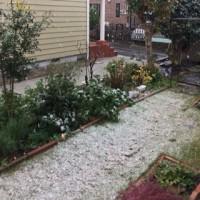 初雪とおでん