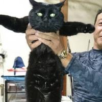 黒猫のきよっち