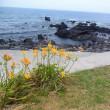 海の日☆伊豆大島ハンマー&ニタリツアー その5/万全を期してケイカイに