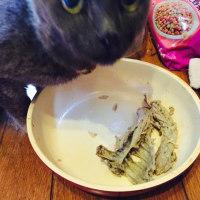 タレちゃん、鶏ガラを食べてる!(◎_◎;)