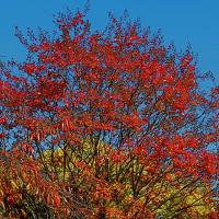 Leaf vein 389