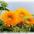 鮮やかな細い花びら満載に圧倒
