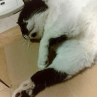 リラ~ックス兄猫