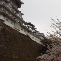 小倉城で花見