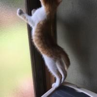 迷い猫、茶トラ君の里親募集します‼️