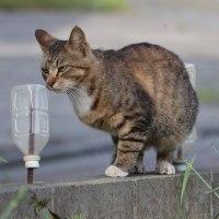 猫探訪・・ペットボトルなんて関係にゃい