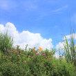 山岳点景:夏花山景