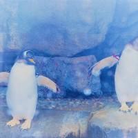 夢見るペンギン。