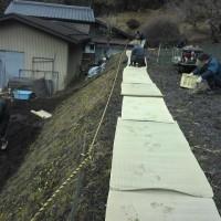 福寿草まつり 遊歩道準備作業