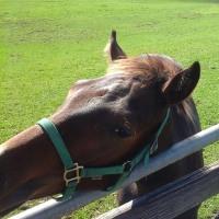 馬に噛まれた