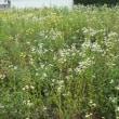 7月21日(金)苫小牧近所の自然散歩~植物調査~の様子