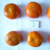 落葉と富有柿(土井卓美)