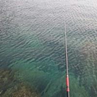 17.1.19(木) チヌ釣り