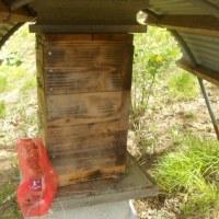 日本蜜蜂の巣箱を設置