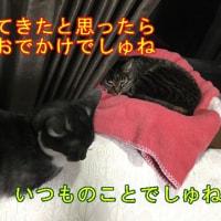 猫と一緒にランチタイム