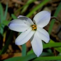 家のまわりの春の花たち