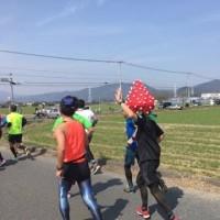 さが桜マラソン2017走行記