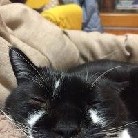 3匹の寝顔