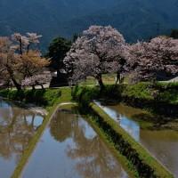 三多気の桜「三重県旧三多気村」