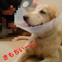 不妊手術完了(・Д・)ノ