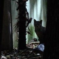 庭猫 370