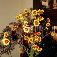 我が家のジャカランダ、並びに室内の花