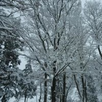 雪!雪!雪ィ!