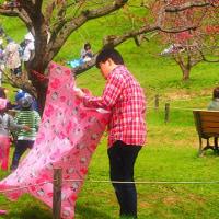 春本番(4)…平岡梅林の梅まつり