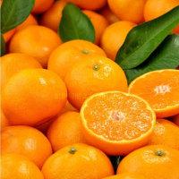 ―ミカンの美味しい季節の陳皮つくり!―