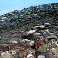海底が謎の隆起、海面10m超の高さに 知床半島の沿岸