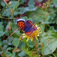 厚木市荻野運動公園内の蝶々