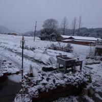 今日も朝から雪