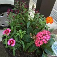お花の植替え