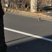 街かどの野鳥たち&ほっとした知らせ