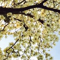 【春分の日の気高さを】高円寺編