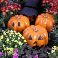 2010-10-24花の美術館02