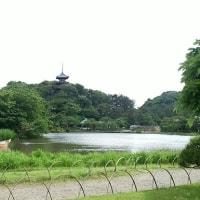 三渓園 横浜茶道連盟茶会 五月