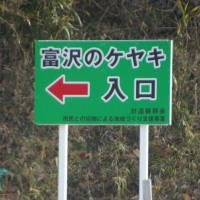 福島県二本松市、富沢のケヤキです!!