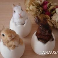 卵うさぎをお届けしました☆
