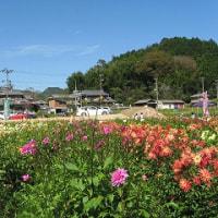 西谷花摘み園へ