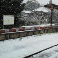 ローカル鉄道物語~菜の花と桜のシーズン、いすみ鉄道は平日でも満員御礼!?~