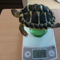 2月の身体測定